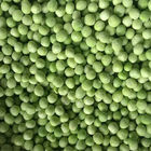 KOSHER Delicious IQF Frozen Green Peas Without Impurities